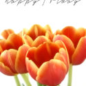 happy friday tulips