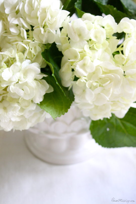 White hydrangeas in a white vase