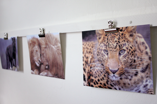 Bulldog clips to hang pictures of favorite animals in kids room