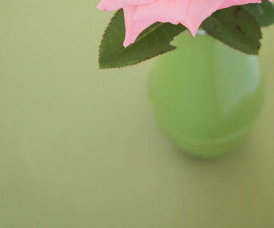 Rosy color palette - greens and pinks
