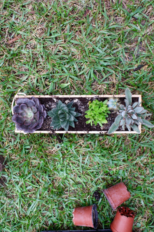DIY succulent centerpiece in a wood box