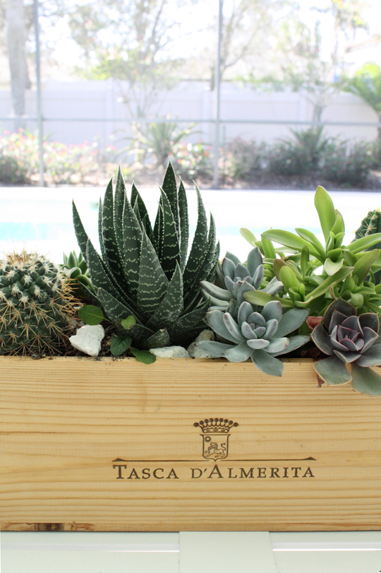 DIY succulent centerpiece in wood wine box