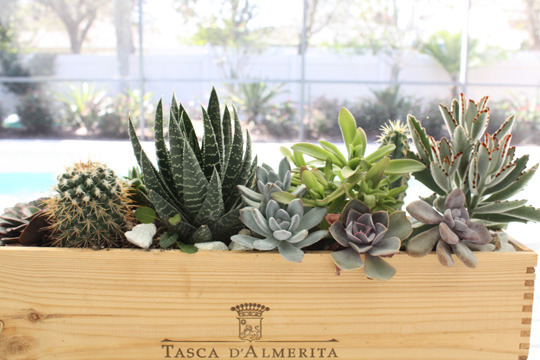 Succulent centerpiece for outdoor dining table