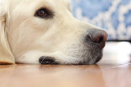 indiana trip - doggie
