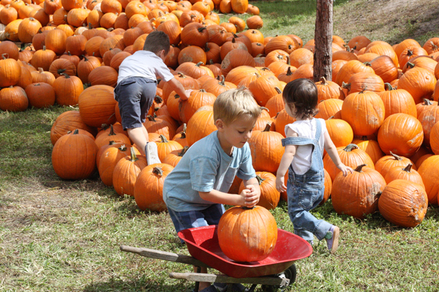 busy-at-the-pumpkin-patch