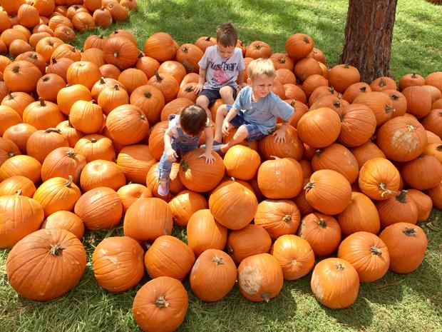 not-enough-pumpkins-at-the-pumpkin-patch