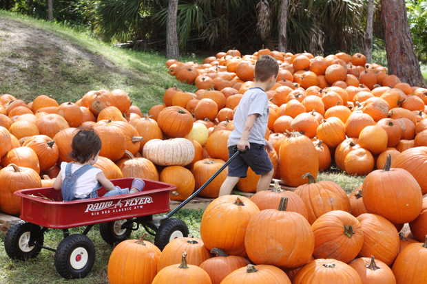 pulling-little-sister-in-the-pumpkin-patch
