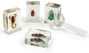 Preserved bugs for kids