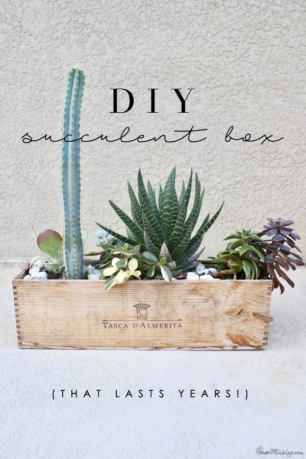 DIY succulent box instructions for proper drainage - lasts years
