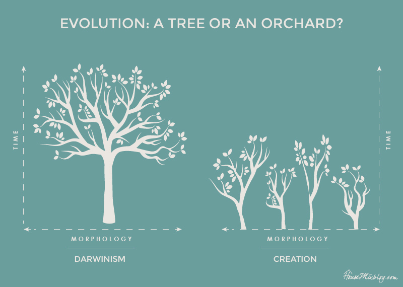 Evolution - Darwinism vs creation - a tree or an orchard