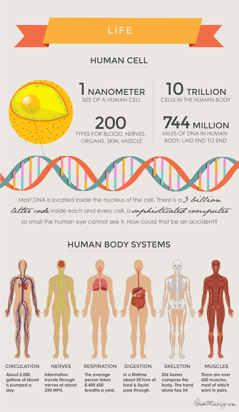Does God exist - proof in the cell - infographic human cell and human body systems-01