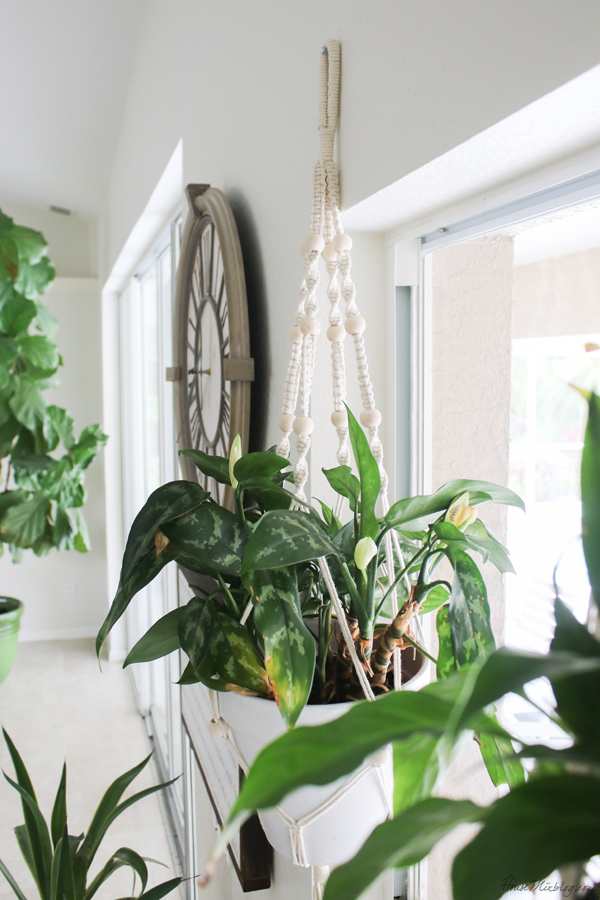 How to add more plants to your space