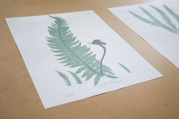 free printable fern illustrations