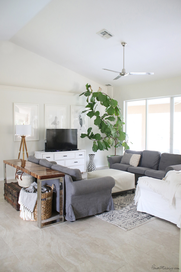 neutral living room with white walls gray ikea sofas giant fiddle leaf fig tree - frugal home decor