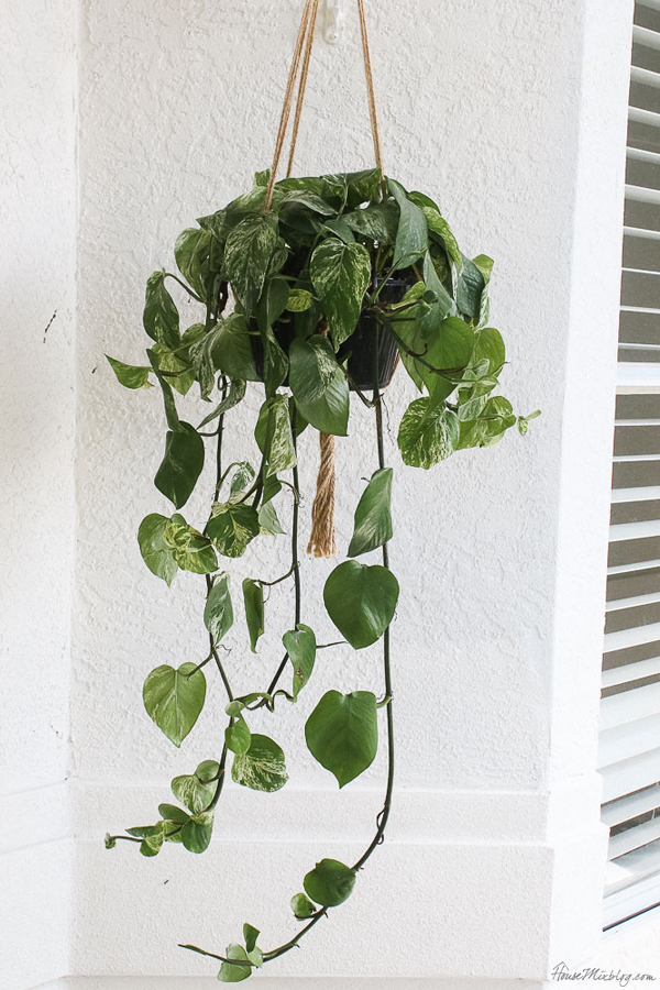 Front porch makeover with paint -  hanging plants