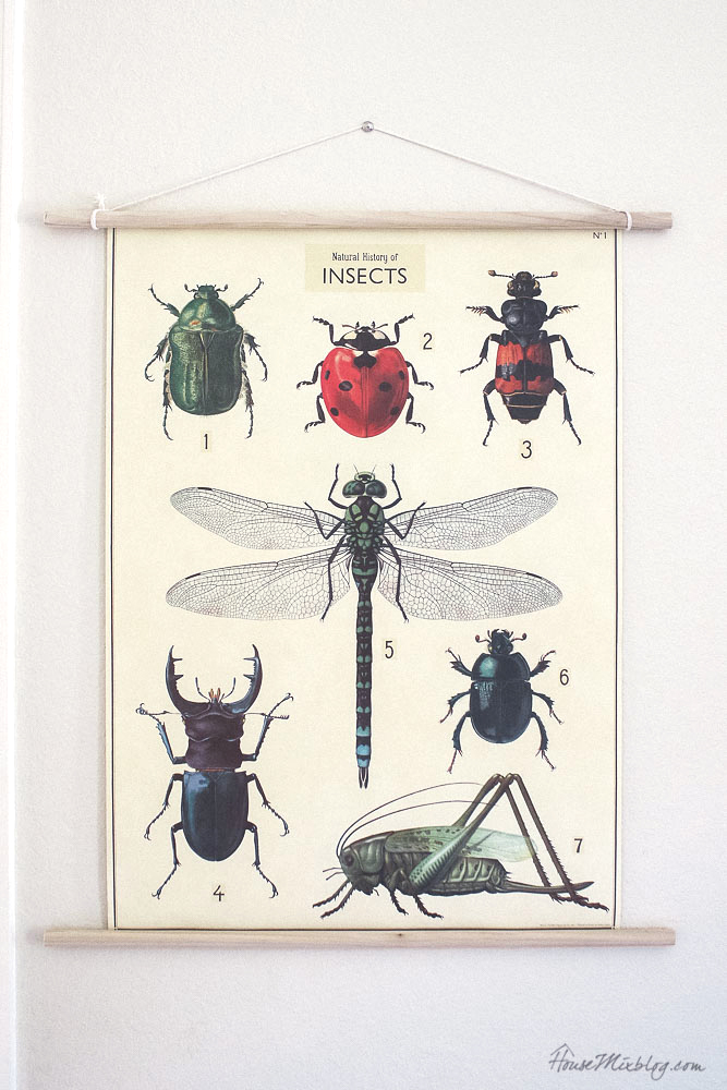 Vintage inspired insect poster for boys room - kid room art ideas