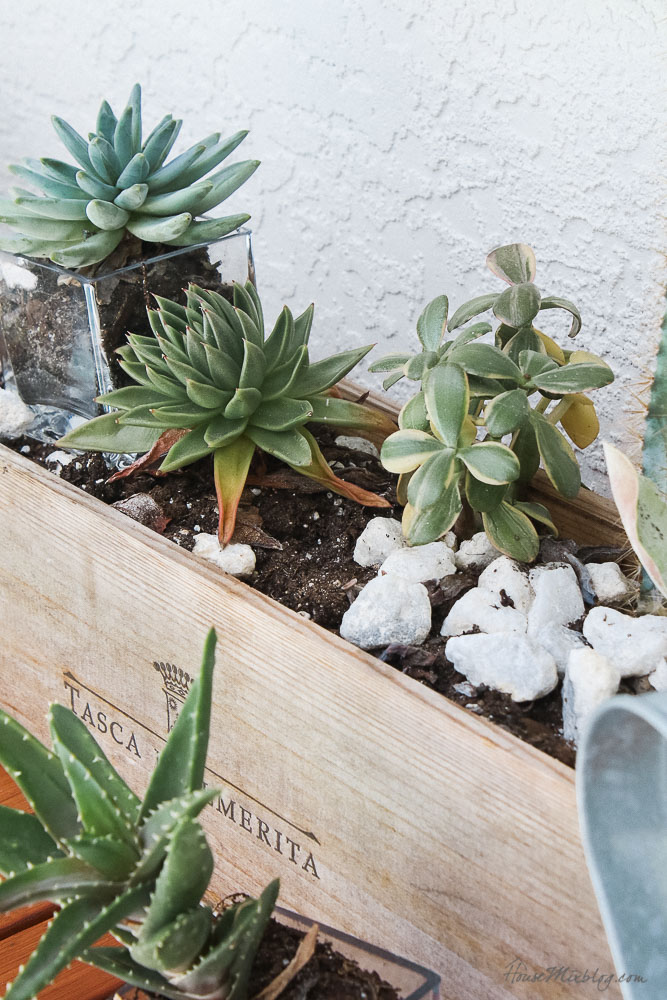Patio, pool and lanai decor ideas on a budget- succulent box that lasts years