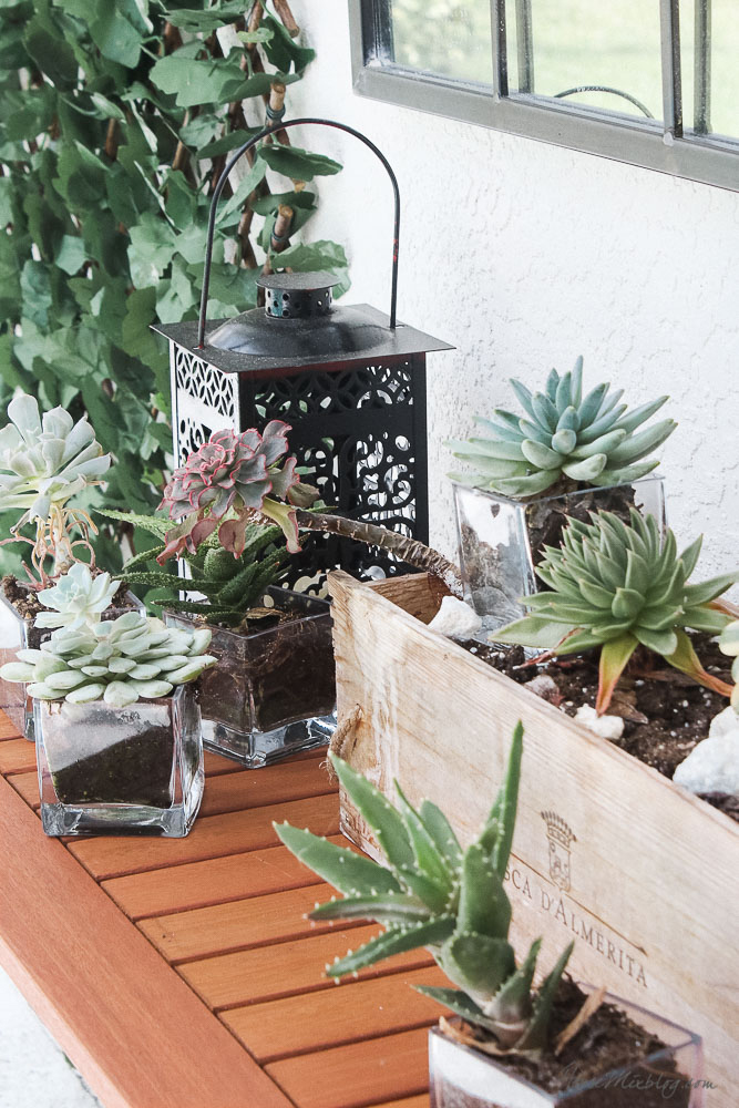Patio, pool and lanai decor ideas on a budget-succulents are hardy and last years