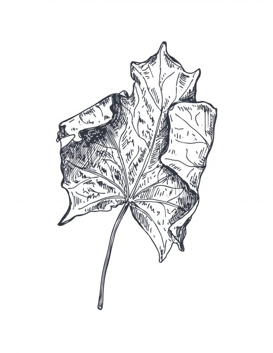 Fall leaf printable - 8x10 framable leaf - cheap free inexpensive fall decor
