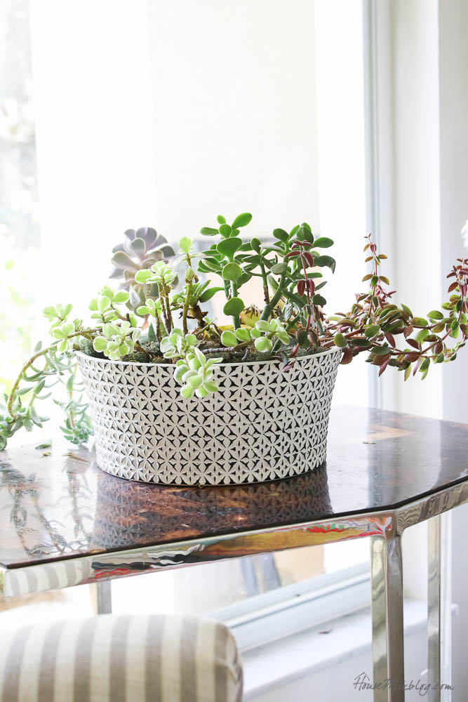 Easy to care for plants - succulents