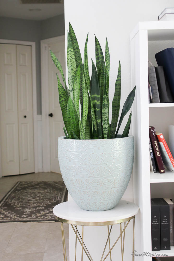 Easy to care for plants - snake plant or mother in laws tongue