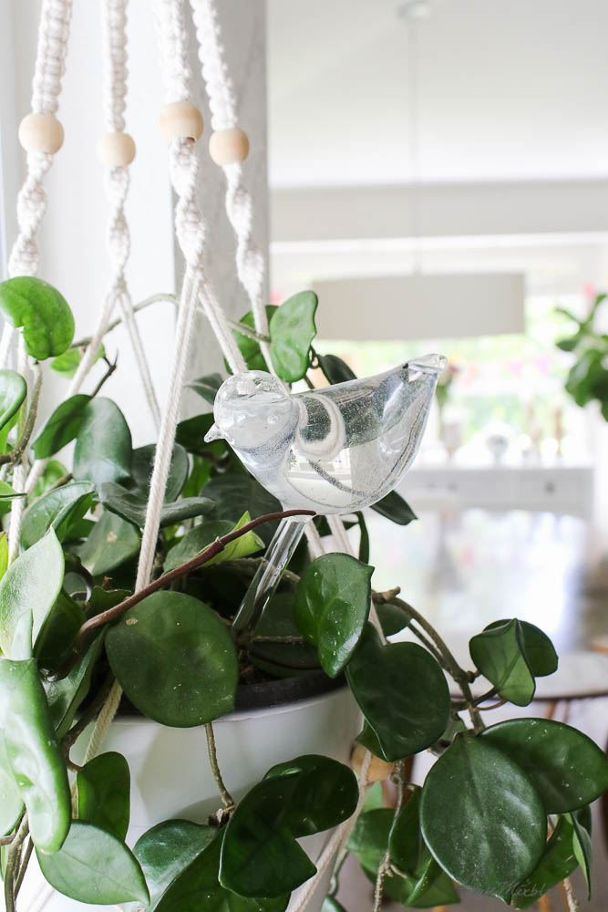 Easy to care for plants - water plants while you're away traveling