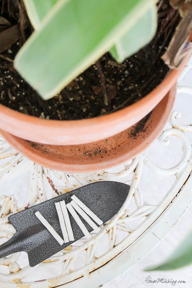 Easy to care for plants - fertilizer