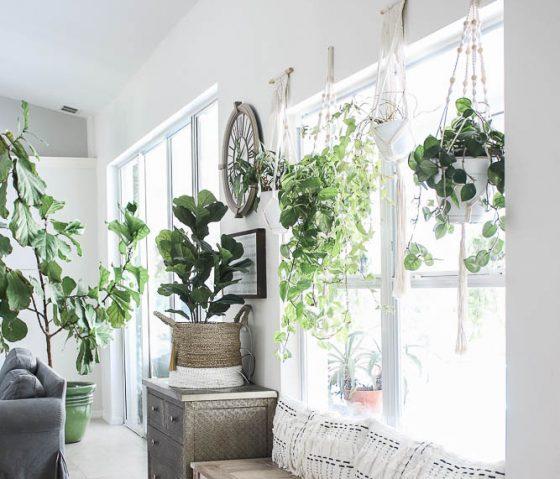 5 plants you won't kill