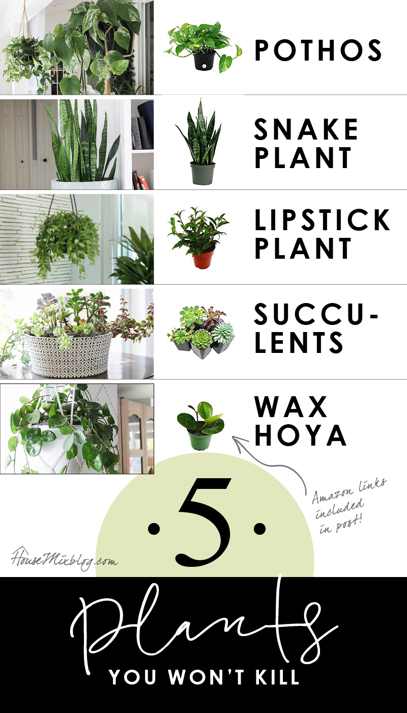 5 plants you won't kill - easy to care for plants for beginners