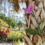 Planting an orchid in a palm tree