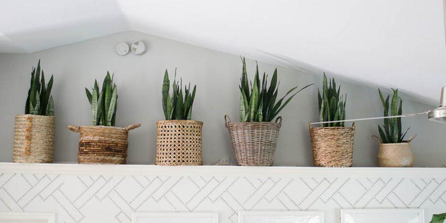 Ledge ideas - snake plants in baskets - living room