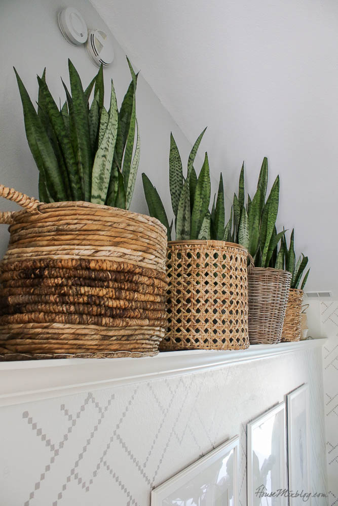 Ledge ideas - snake plants in baskets - living room layout