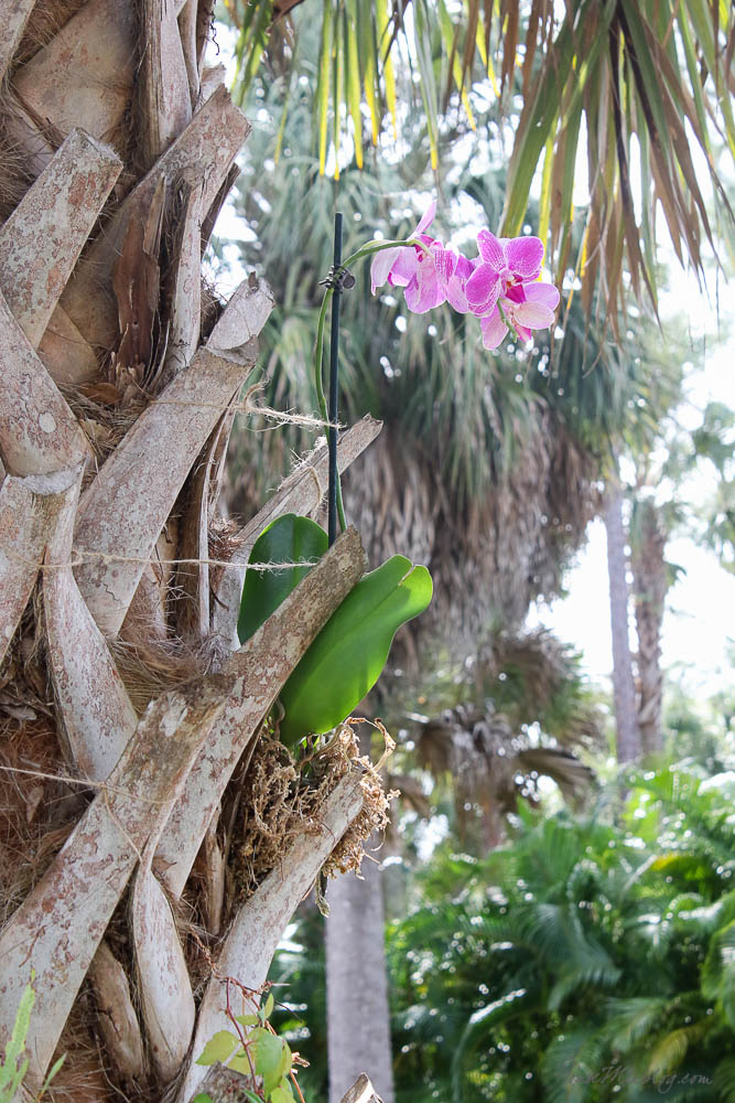 How to plant an orchid in a palm tree