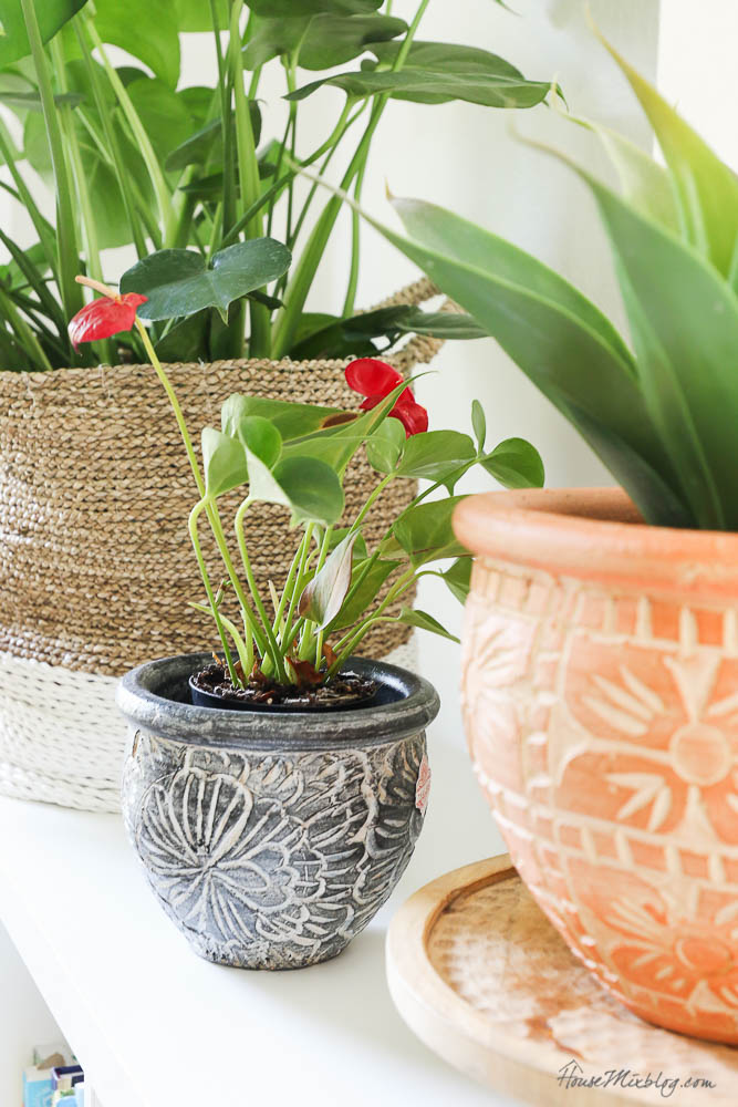 plants in reading nook - how to style a shelf with plants